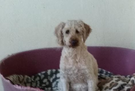 Disappearance alert Dog  Female , 8 years Jarny France