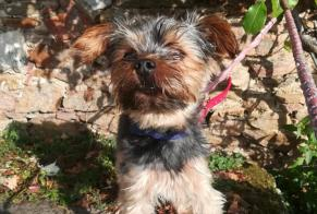 Discovery alert Dog  Male Olonne-sur-Mer France