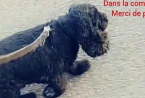 Disappearance alert Dog  Female , 7 years Daix France