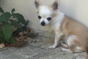 Disappearance alert Dog  Female , 12 years Rue France