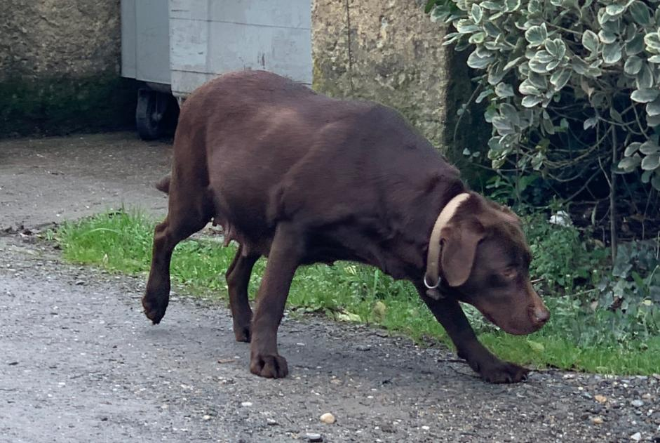 Discovery alert Dog  Unknown Bergerac France