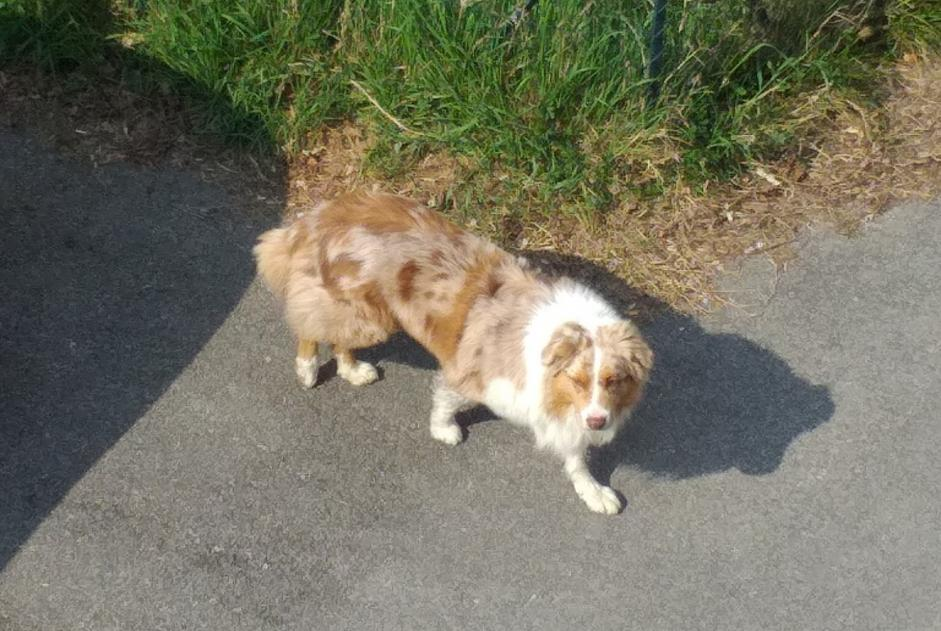 Discovery alert Dog Unknown Chatte France