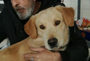 Disappearance alert Dog miscegenation  Male , 1 years Saint-Martin-de-Seignanx France
