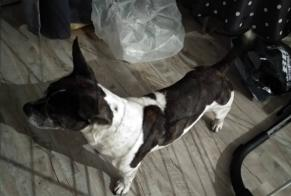 Discovery alert Dog Male Arles France