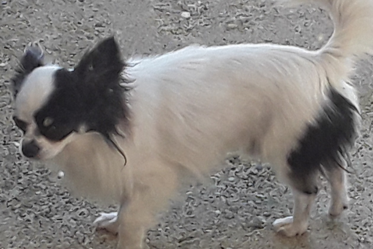Alerte Disparition Chien  Mâle , 4 ans Mantry France